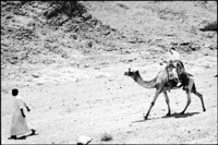 I'm in the Sinai being led by a guide.  When the camel stood up with me on it, it felt unstable, high and fun.  The ride was bumpy.